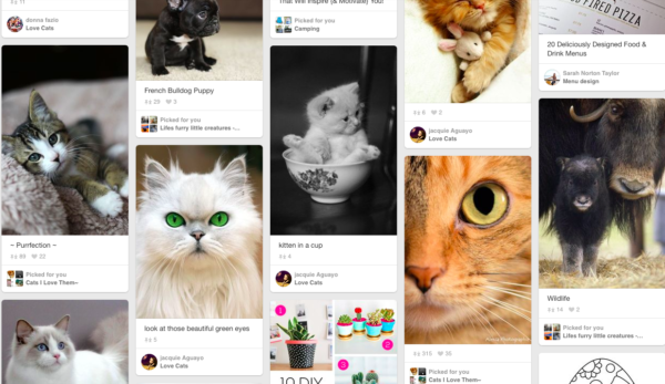 Pinterest For Cat Ladies!