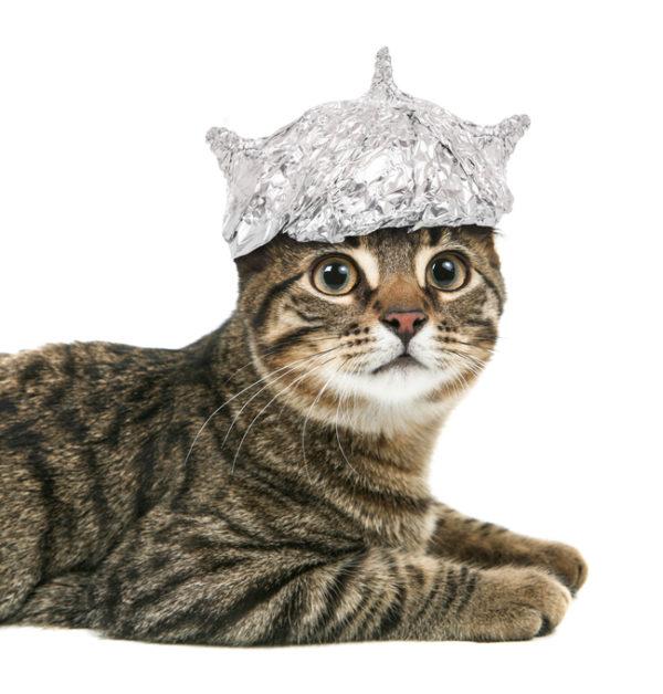 Cat In A Tin Foil Hat...because cute